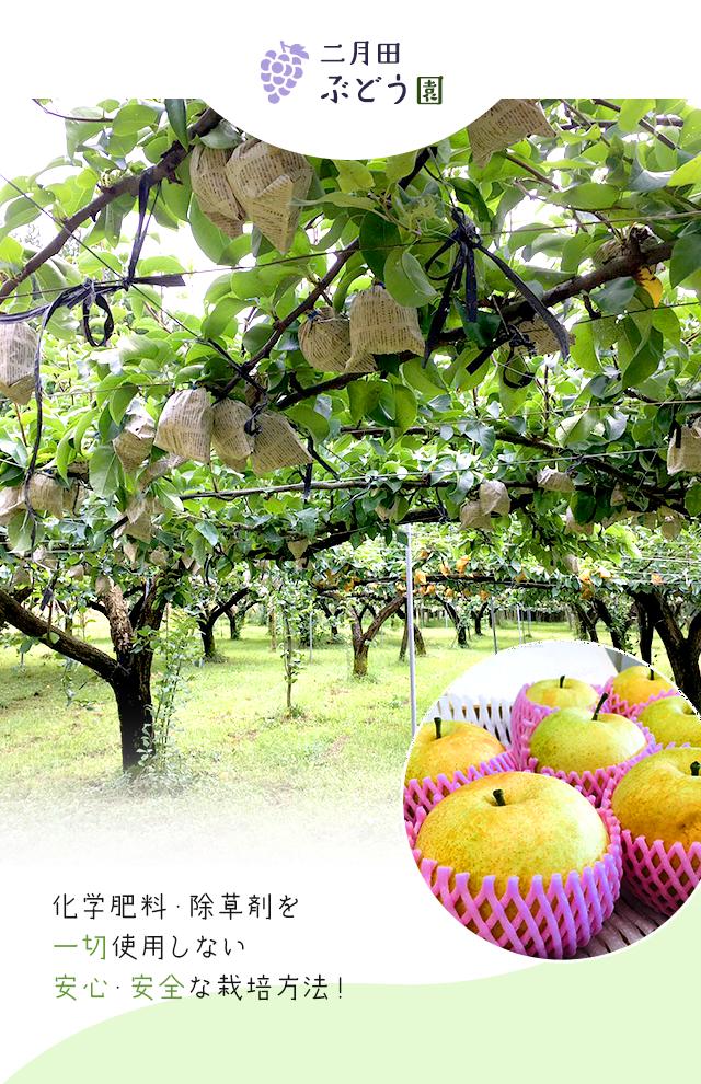 化学肥料・除草剤を一切使用しない安心・安全な栽培方法!
