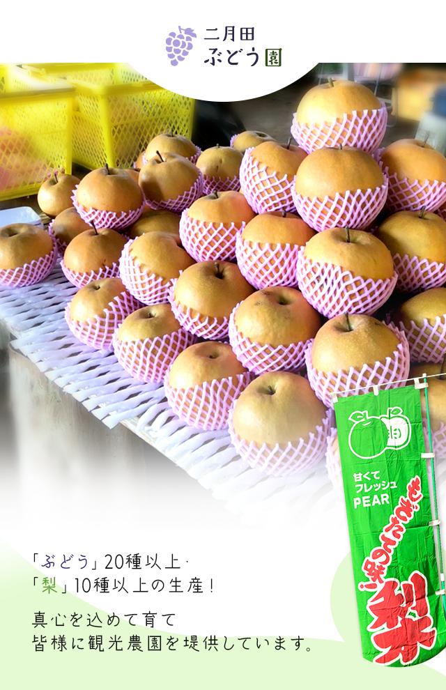 「ぶどう」20種以上・「梨」10種以上の生産! 真心を込めて育て、皆様に観光農園を提供してます。